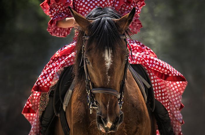 13 caballos muertos en El Rocío, de hambre y de sed