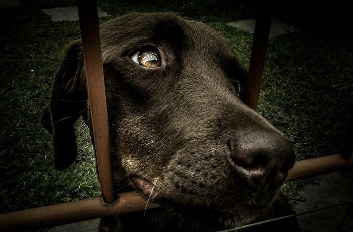 8 meses de cárcel por maltrato animal