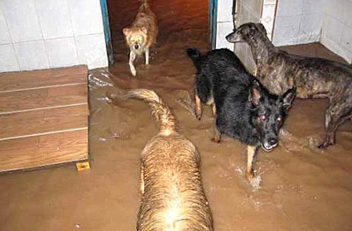 385 perros de las protectoras de Carcaixent y Xàtiva pueden morir