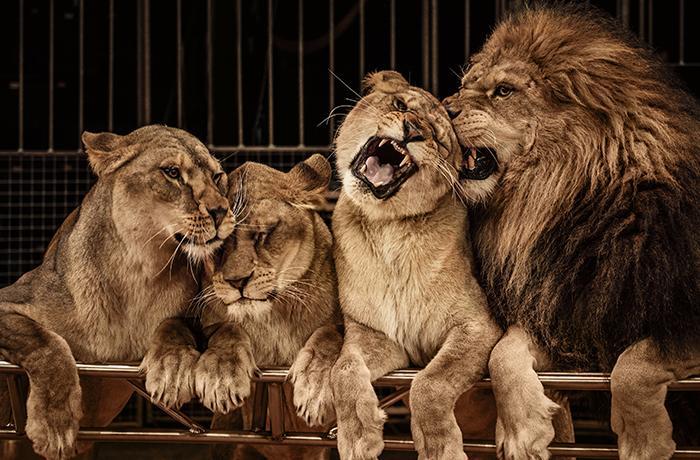 L'Escala se declara municipio libre de circos con animales salvajes