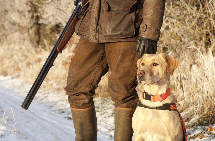 Las protectoras se reúnen con Medi Natural por el perro de La Sènia
