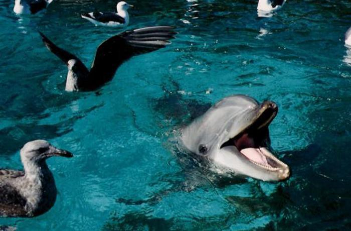 Diversos científicos consideran inaceptable el uso de delfines en cautividad