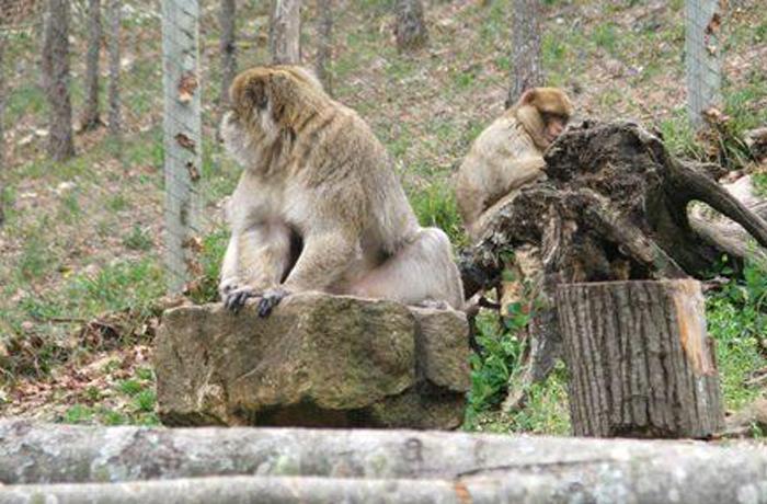 La macaca CHAFI ya está en su nuevo hogar en Bilbao