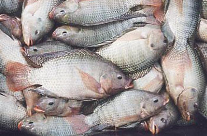 Un nuevo informe muestra el sufrimiento en la pesca comercial