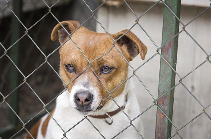 Cuatro detenidos en Logroño por maltrato y organización de peleas de perros