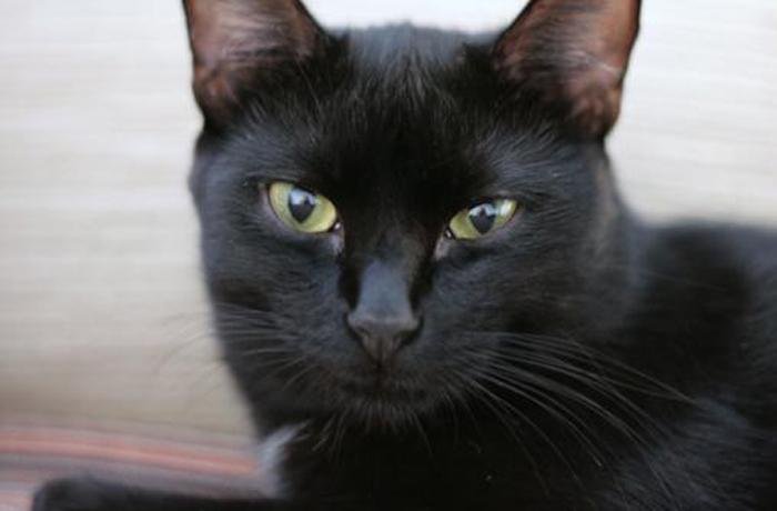 Multan a una mujer que adoptó un gato porque se negó a que la protectora visitase al animal