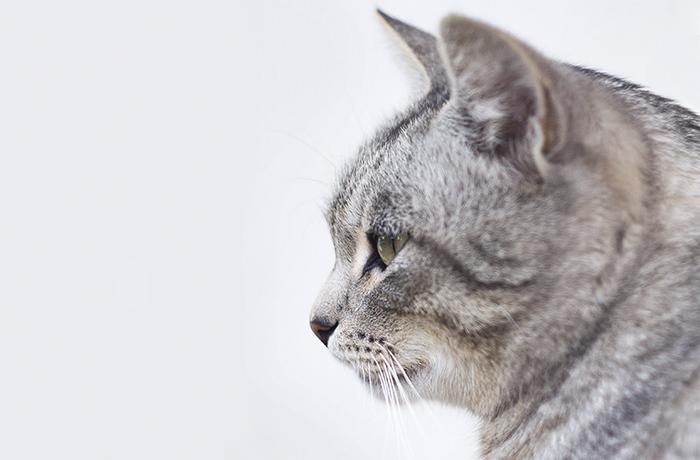 FAADA denuncia un reincidente por maltratar animales