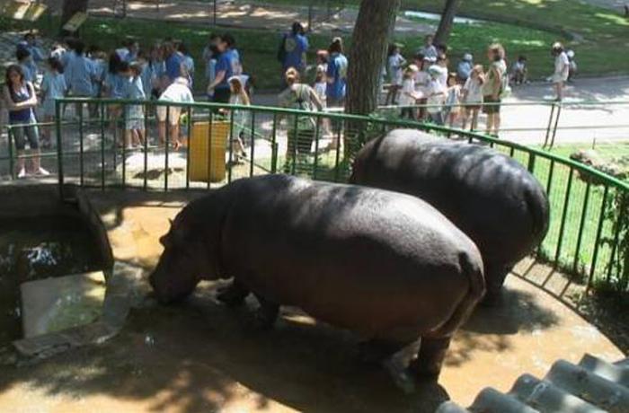 InfoZoos denuncia al Zoo de Barcelona por falta de seguridad