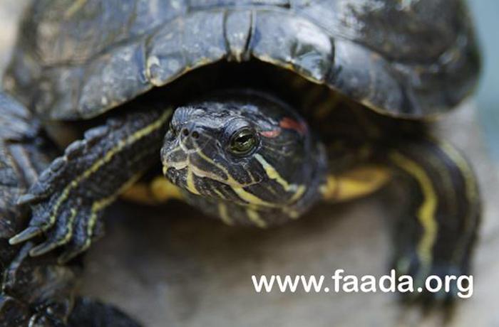 Retiran 120 tortugas abandonadas en un parque de Barcelona
