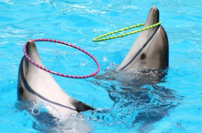 Una encuesta revela el desconocimiento acerca del sufrimiento de los delfines