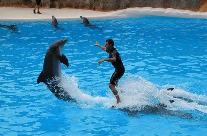 Nuevo Informe sobre la situación de los delfinarios en Europa