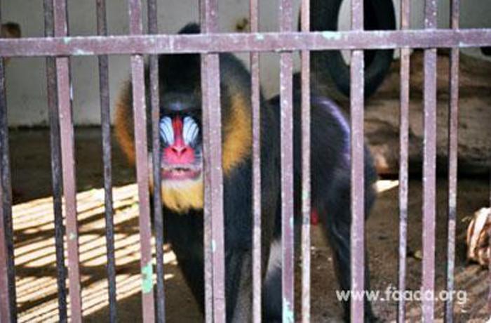 La Comisión vuelve a llamar la atención a España por el estado de los zoos