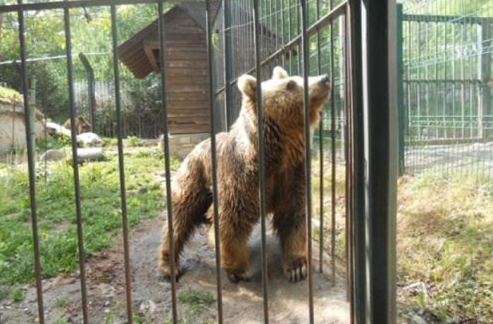 26.000 personas piden la reubicación de dos osos mantenidos en un párking del Valle de Aran