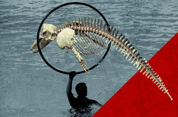 Los espectáculos de delfines, al márgen de la legalidad