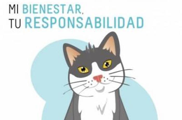 Campaña de tenencia responsable de gatos