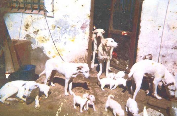 Inhabilitación para la tenencia de animales a una vecina de Barcelona