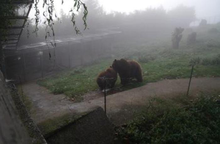 Una madre adoptiva para Bruno, el oso rescatado