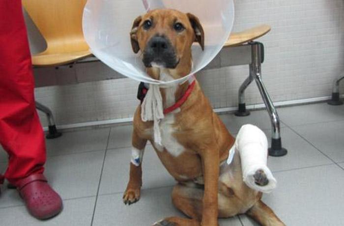 Sanción de 2.001€ a una vecina de Viladecans por abandonar a su perro