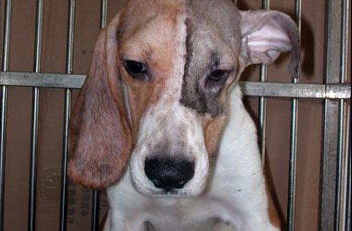 Vivisección animal: ¿violencia justificada con la ciencia?