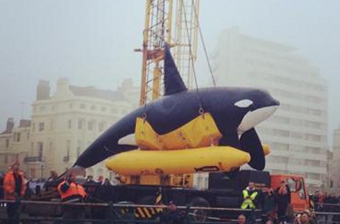 Buscando más implicación de las instituciones europeas para los cetáceos en cautividad