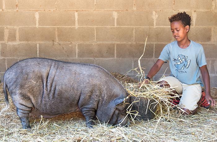 Buscamos historias de empatía con los animales, cuéntanos la tuya