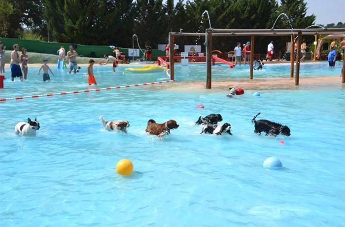 ¿Qué tal un chapuzón en la piscina con tu perro?