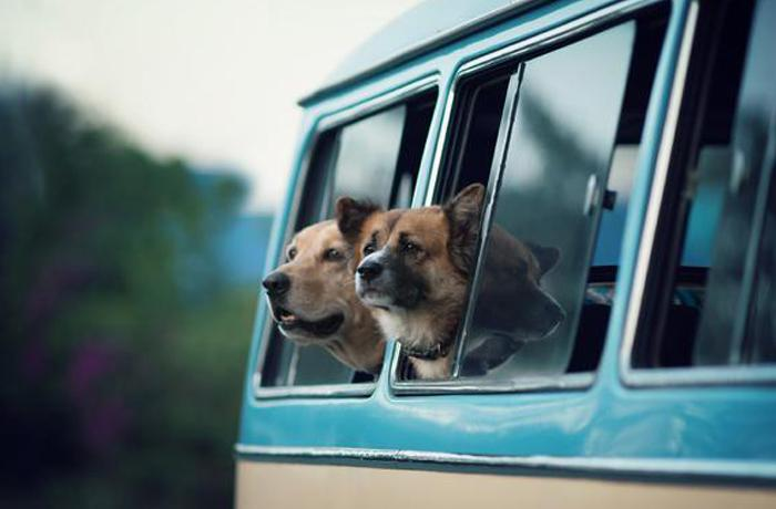 ¡Voy contigo! Vacaciones con tu animal de compañía (I)