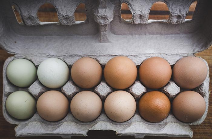 Firma para que Alemania elimine las jaulas en batería para las gallinas ponedoras