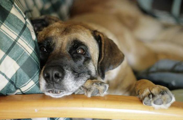 ¿Qué hacer con tu perro si hace mal tiempo?