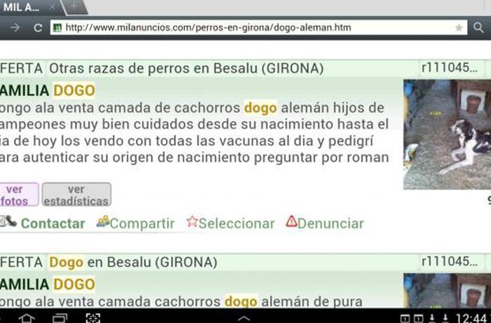 Sanción de 4.900 euros a un criador ilegal de perros de Girona a raíz de una denuncia de FAADA