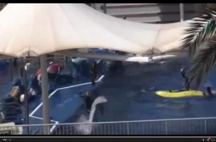 SOSdelfines denuncia un posible maltrato de los delfines alojados en Marineland Mallorca