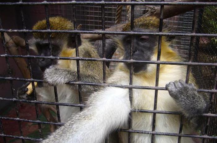 Se reubican los últimos animales del zoo Oasis del Valle, que cierra sus puertas definitivamente