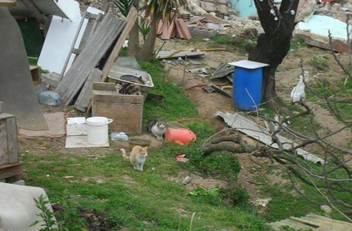 La CIPAC denuncia que los animales abandonados de Montcada están desamparados