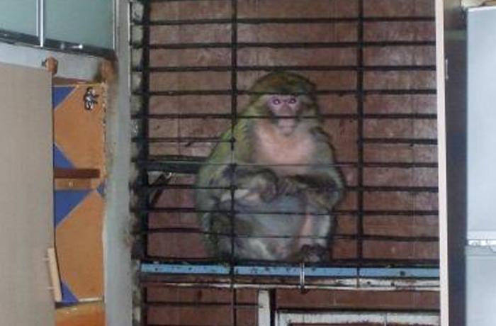 Dora, otra víctima del tráfico ilegal