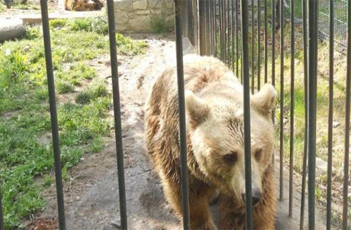 Situación actual de los osos de Arties