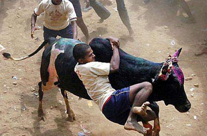 La India se queda sin su fiesta taurina