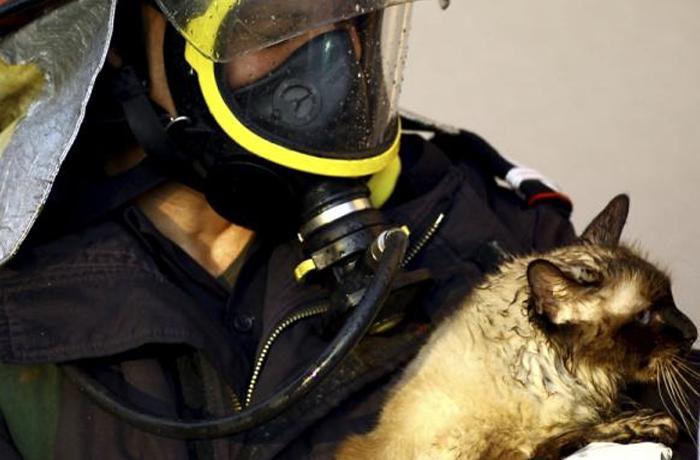 Presentamos el Programa de Prevenció i Rescat en emergències animals (PIREA)