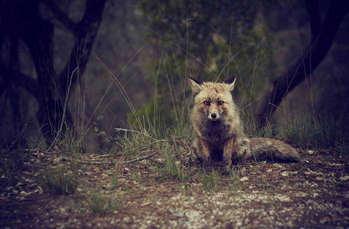 Condena penal por matar especies protegidas en Monterrubio