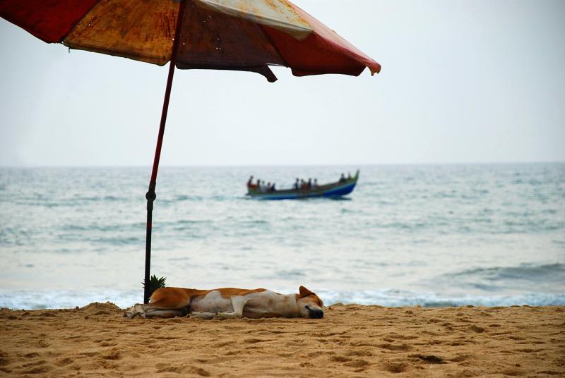 ¿Qué necesitas para ir a la playa con tu animal?