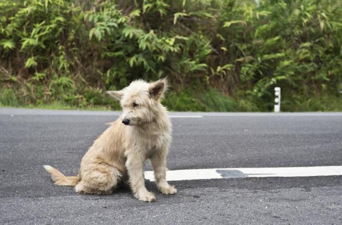 La Diputación de Barcelona identificará a los animales muertos en sus carreteras