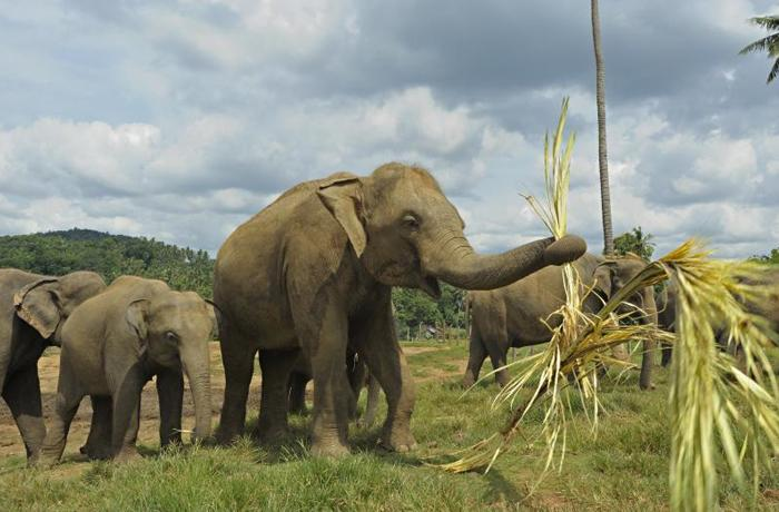 16 cosas que no sabías de los elefantes