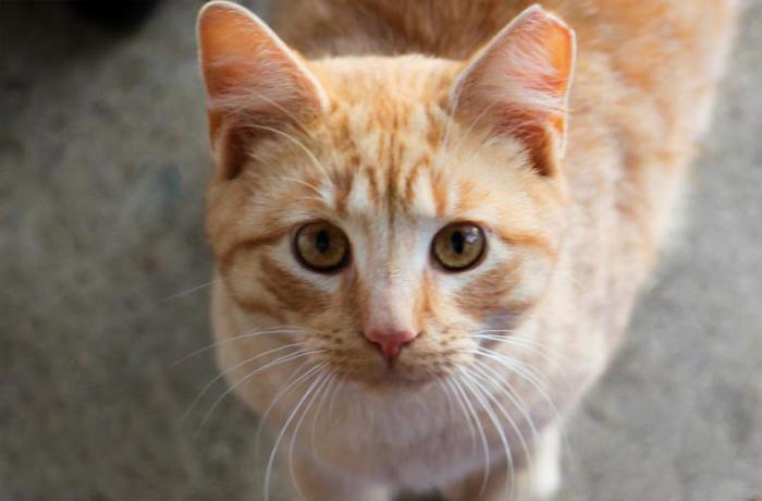Cuidadores de colonia de gatos: vivir sin vacaciones