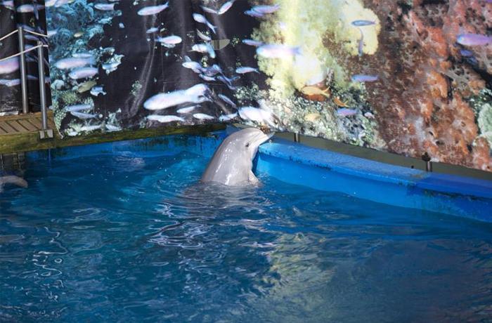 Un verano intenso para cerrar el delfinario de Barcelona