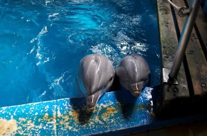 Nocturnidad y alevosía del Ayuntamiento de Barcelona en el traslado de los dos delfines a Valencia
