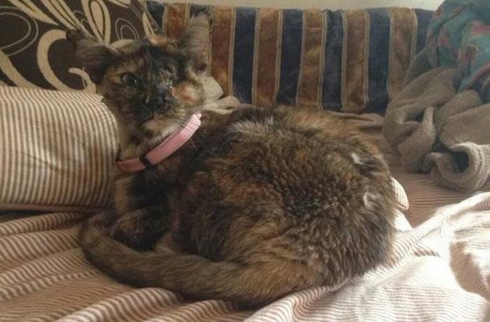 Kitty, una historia con final feliz