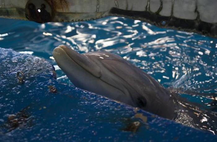 Barcelona podría adquirir la propiedad de nuevas crías de delfín