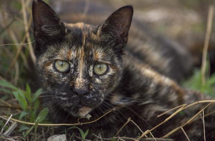 Riba-Roja d'Ebre ordena a una empresa de control de plagas la captura de sus gatos ferales