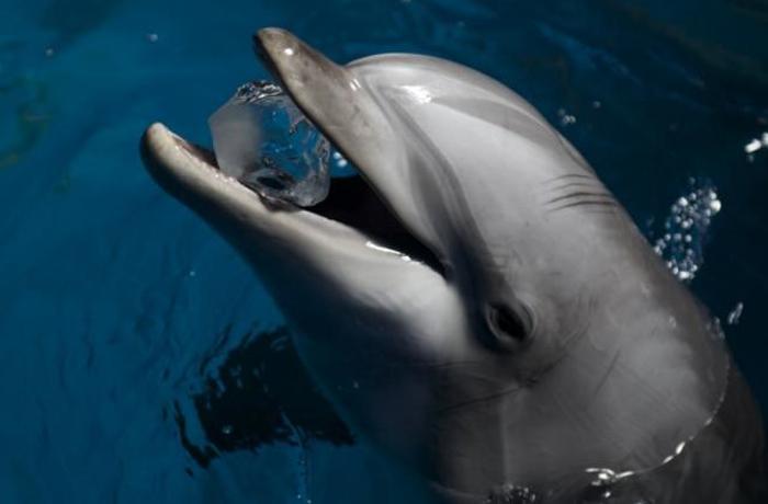 Diciembre 2016: fecha límite para decidir el destino de los delfines de Barcelona