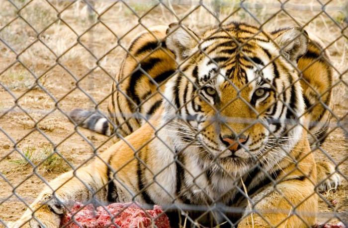 Últimas horas para participar en la consulta pública Europea sobre zoos