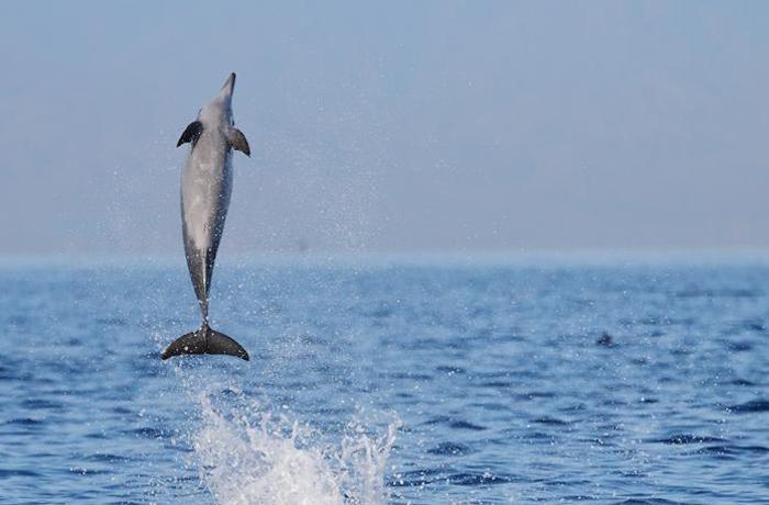 ¡Lo conseguimos! Barcelona cerrará su delfinario